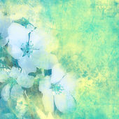 Flower vintage background — Stock Photo