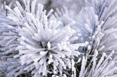 Beautiful rime — Stock Photo