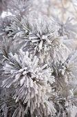 美丽的霜 — 图库照片