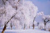 北方的冬天 — 图库照片