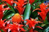 美丽的花丛 — 图库照片