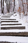The stone steps of the forest — Stock Photo