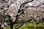 Parc de paradis en pleine floraison — Photo