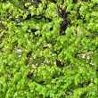 Background photo of green little plants in tree - Stock Photo