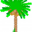 Stock Vector: Palm tree with coconuts