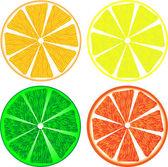Rebanadas de fruta cítrica aislados en blanco — Vector de stock