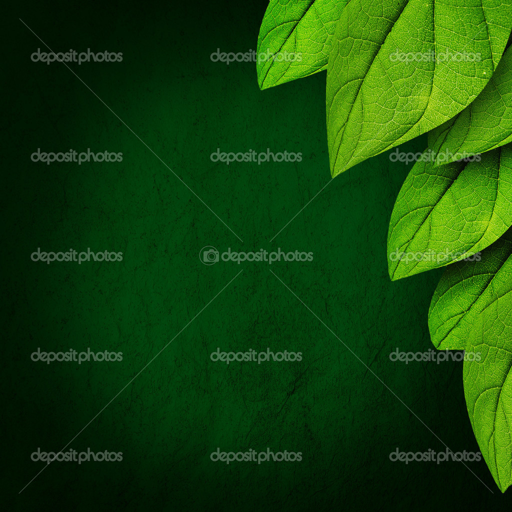Green leaves on dark background — Stock Photo © shirophoto ...