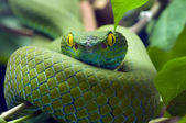 Green snake — Stock Photo