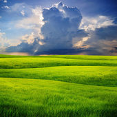 Raining cloud over grass field — Stock Photo