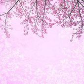 Pink sakura abstract background — Stock Photo
