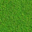 Grass texture — Stock Photo #6719530