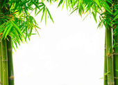 Bamboo on white — Stock Photo