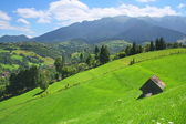 Beautiful field with a lone house in Bran — Stock Photo