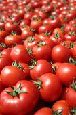 红番茄 — 图库照片
