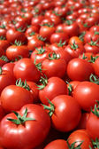 Tomate rojo — Foto de Stock
