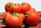 Red tomato — Stock fotografie
