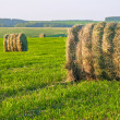 Haystack in field — Stock Photo #6164671
