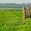 Royalty-Free Stock Photo: Haystack in the field