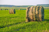 Haystack in the field — Stock Photo