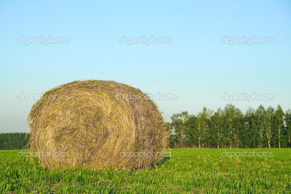 Relaxing view of the haystack in the field — Stock Photo #6164720