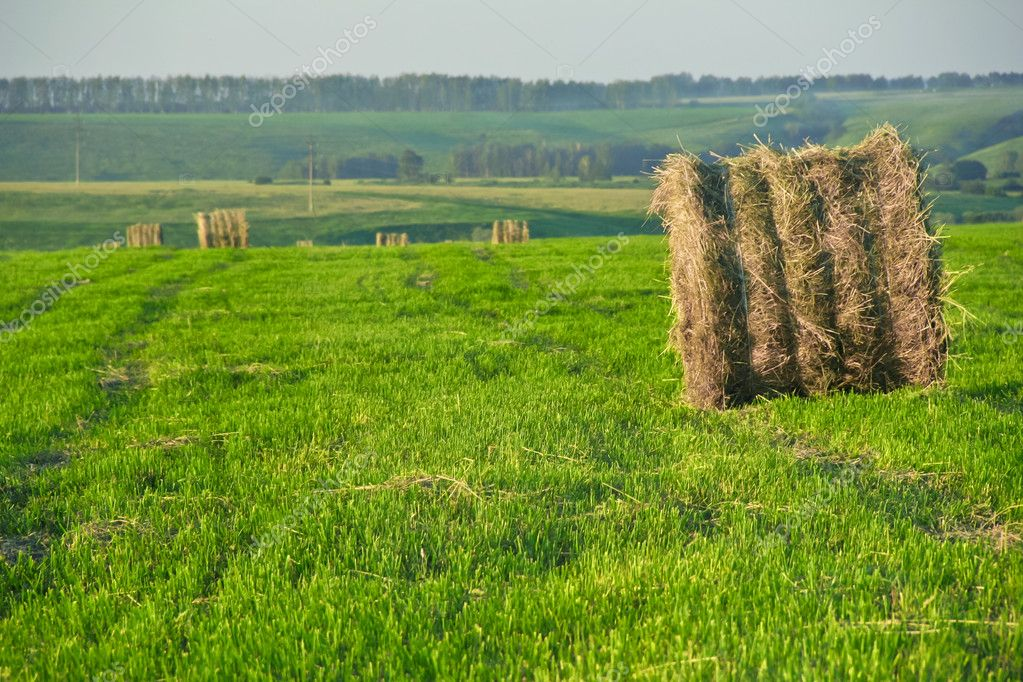 Relaxing view of the haystack in the field — Stock Photo #6164749