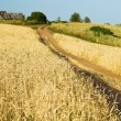 Country road through the field — Stock Photo