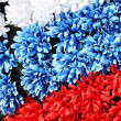 Three coloures of flag: white, blue, red, made from flowers — Stock Photo #5517420