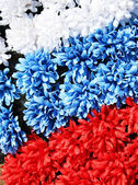 Three coloures of flag: white, blue, red, made from flowers — Stock Photo