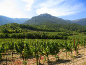 Mountains and grapes plantations — Stock Photo