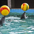 Dolphins with yellow balls — Stock Photo