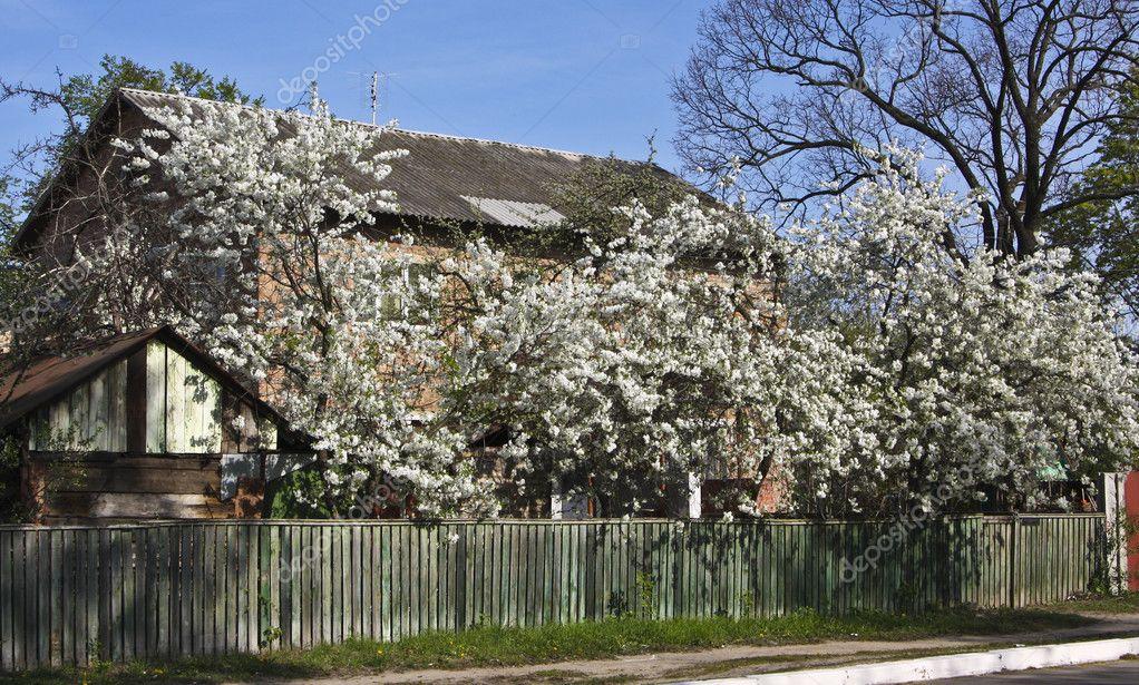 Фото красивых загородных домов с ландшафтом