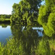 Willow trees near lake — Stock Photo #5888787