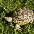 Tortoise — Stock Photo #6505881