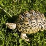 Tortoise — Stock Photo #6505881
