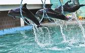 дельфины на шоу — Стоковое фото