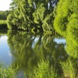 Lake and willow trees — Stock Photo #6730016