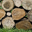 Pile of wooden logs — Stock Photo #5471917