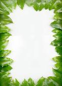 Frame foliage — Stock Photo