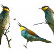 Set European bee eater on a branch isolated on white, Merops apiaster — Stock Photo