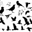 Birds silhouette isolated on white background - Stock Photo