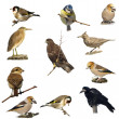 Set photographs of birds isolated on white background  (2) — Stock Photo