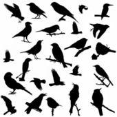 25 aves de silhueta isolados no fundo branco — Fotografia Stock