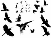Silhouette photographs birds in flight — Stock Photo
