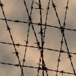Stock Photo: Barbed wire fence for texture and background