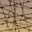 Barbed wire fence illustration — Stock Photo