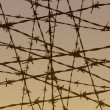 Barbed wire fence illustration - Stock Photo