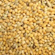 Macro birdseed, mixed granular food for budgerigars — Stock Photo #5433028
