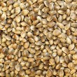 Macro Hemp seed — Stock Photo #5433066