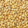 Millet background — Stock Photo