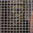 Metal texture with view of  underground (Auschwitz) — Stock Photo
